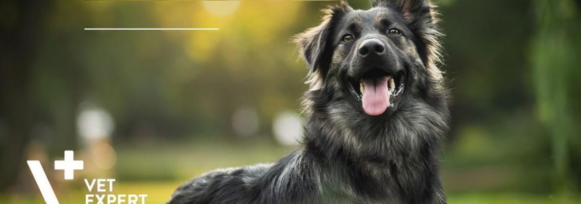 Alergie la câini - simptome și metode de diagnostic