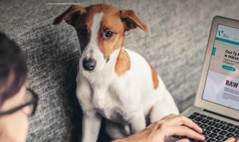 Animalele de companie nu reprezinta nicio amenintare