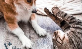 Boli virale ale câinilor și pisicilor pe care le puteți întâlni
