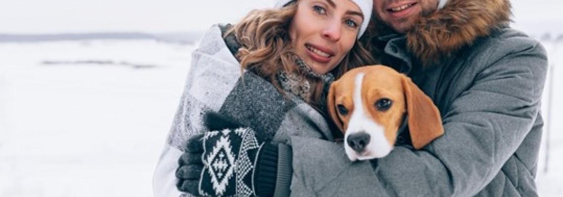 Cum să ai grijă de un câine în timpul iernii? Ghidul tutorelui